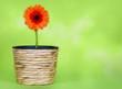 Blume auf grünem Hintergrund