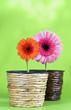 Zwei Blumen in Blumentöpfen