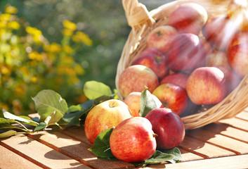 Äpfel mit Sonnenstrahlen