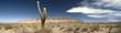 Desert cacti, Argentina