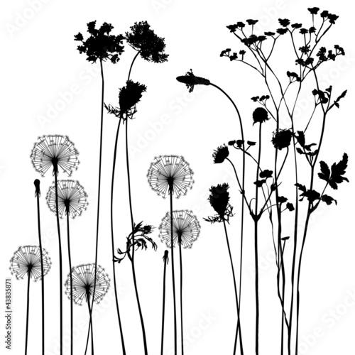 Fototapeta collection, for designers, plant vector