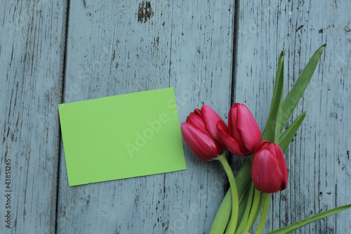 Tulpen mit Blankozettel