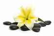 spa stones and lily isolated