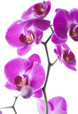 Fototapety exotic beauty elegant flowers