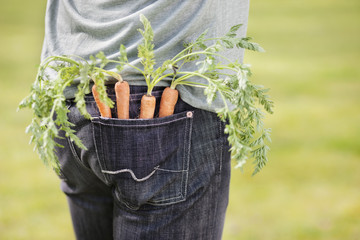 Carrots in the pocket of a man