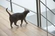 Cat walking on a hardwood floor