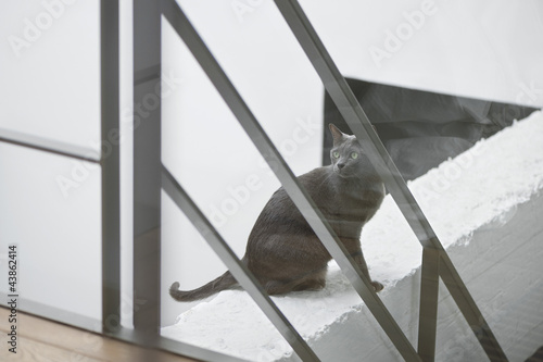 Cat sitting on the ledge of a wall