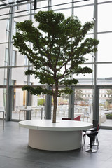 Tree growing on a table in an office lobby