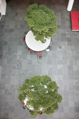 High angle view of bonsai trees growing on tables in an office lobby