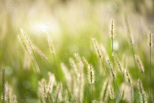 Fresh green grass nice background (Napiergrass Taishigrass)