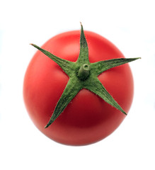 One red tomato isolated on one background