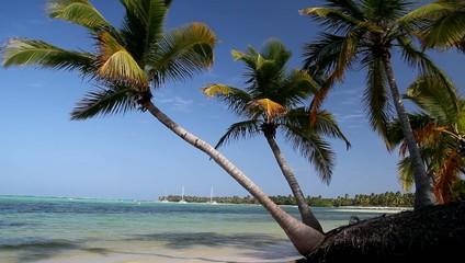 Palm on tropical beach, clip