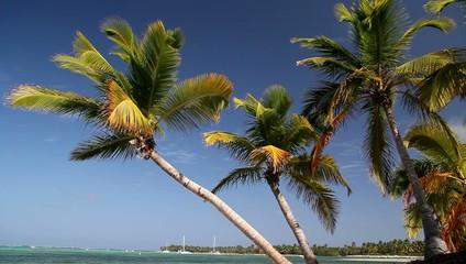 Palms on tropical beach, footage