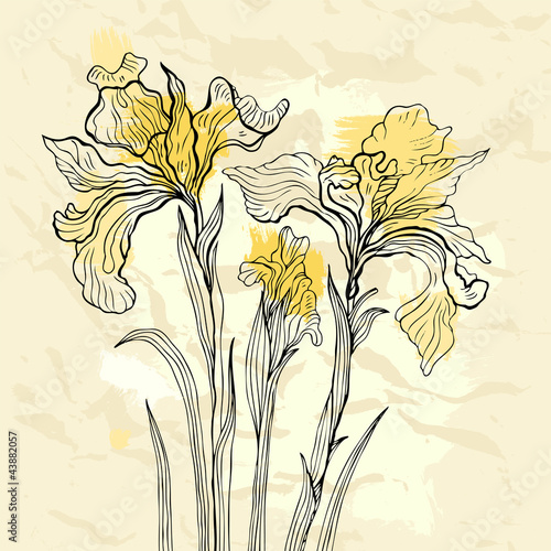 Tuinposter Abstract bloemen Iris flower vector illustration.