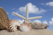 seashells and sand with blue sky background
