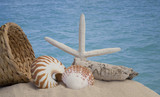 seashells and sand with ocean background