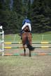 Equestrian jumping hurdles