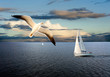 Sail boat and seagull