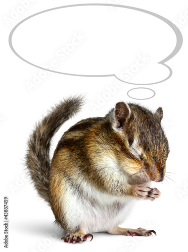 Funny chipmunk dreaming with thought bubble