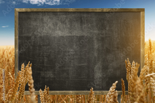 Blackboard in Cornfield