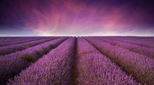 Atemberaubende Lavendelfeld Landschaft Sommer Sonnenuntergang