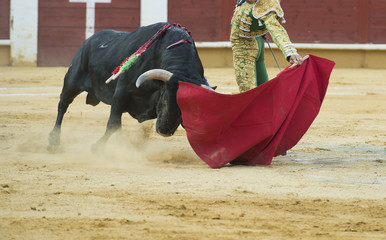 Torero citando al toro con estilo.