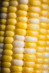 Close-up of  Delicous Varigated Sweetcorn