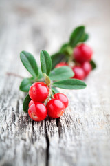 Lingonberries