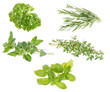 Different Herbs isolated on white