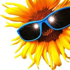 Sonnenblume mit Brille