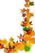 Goldener Herbst: Fallende Blätter