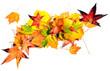 Herbst-Stimmung: Arrangement aus Herbstblättern