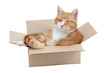 relaxing cute tomcat in box