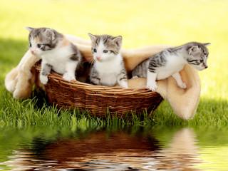 Katzenbabys im Körbchen mit Spiegelung