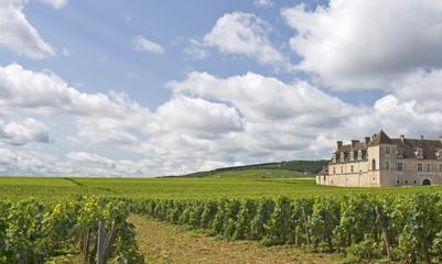 Vineyard field in Bourgogne, Burgundy. France.