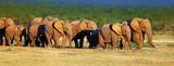Elephant herd on open green plains