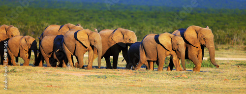 Elephant herd on open green plains