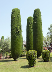 Cypress Trees at Sirmione Lake Garda Italy