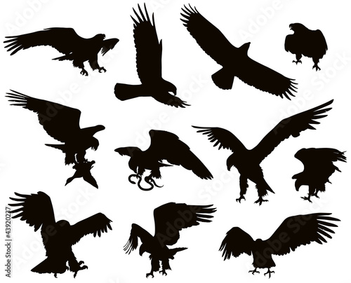 Hunting eagle detailedsilhouettes set. Vector