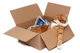 relaxed tomcat in removal box poster