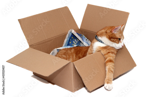 relaxed tomcat in removal box
