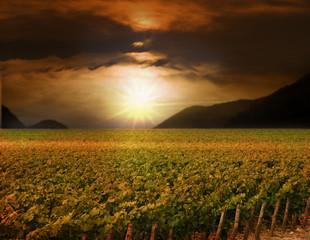Weinberge bei Sonnenuntergang