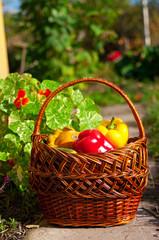 basket qith harvest