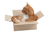 snoopy tomcat in removal box poster