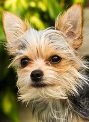 Cut Hybrid Puppy