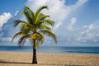 Fototapeten,strand,sommer,urlaub,palme