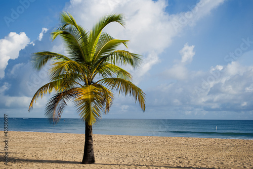 Fototapeten,strand,sommer,urlaub,palm tree