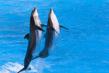 Dauphins dansant
