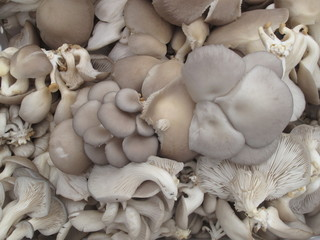 Wild edible organic mushrooms on display at farmer s market