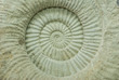 ammonite prehistoric fossil shell cross section texture
